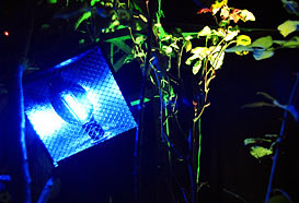Lighting alongside plants