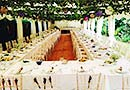 Rustic marquee with hanging leaves